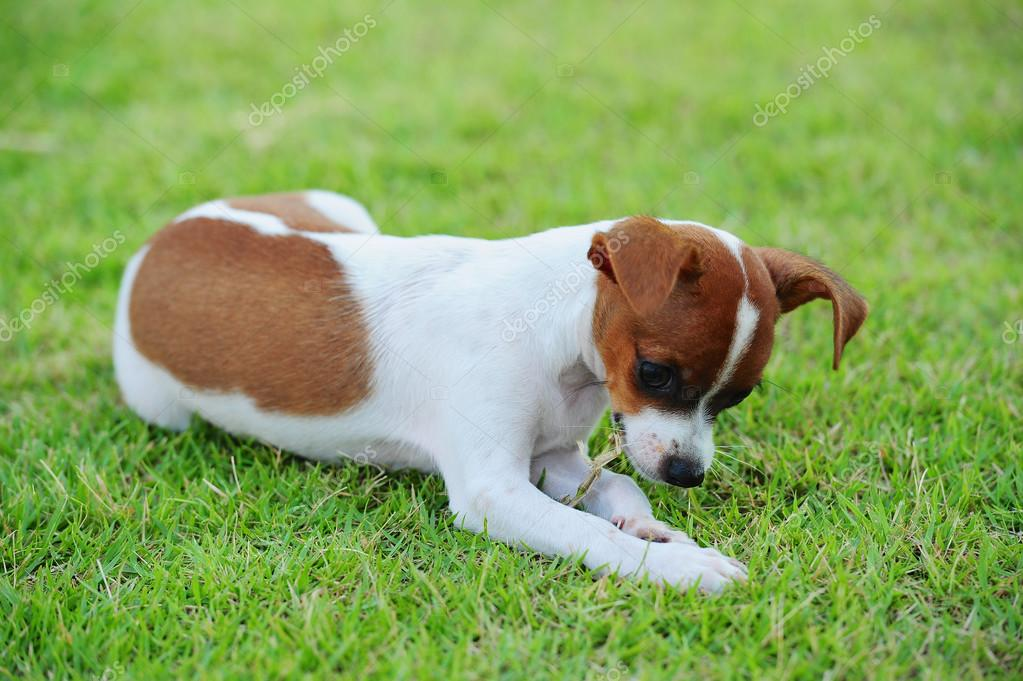 dog eating grass - HD2100×1400