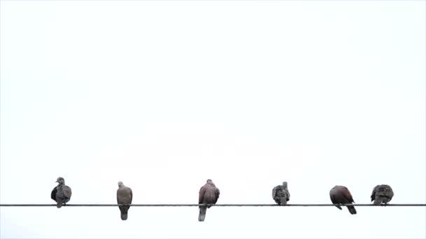 Vögel auf Kabeldraht