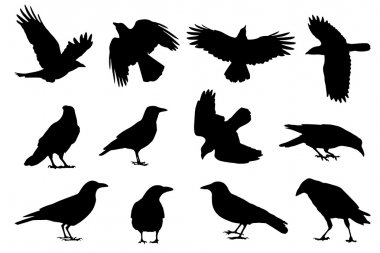 Crow Silhouette Premium Vector Download For Commercial Use Format Eps Cdr Ai Svg Vector Illustration Graphic Art Design Crow silhouette free vector we have about (5,602 files) free vector in ai, eps, cdr, svg vector illustration graphic art design format. svg vector illustration graphic