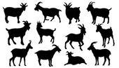 Photo goat silhouettes