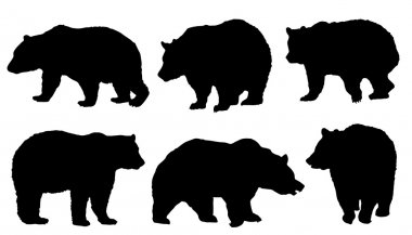 Bear silhouettes on the white background stock vector