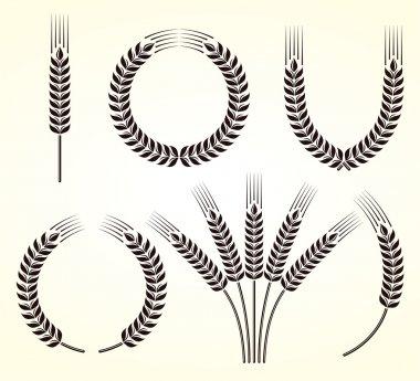 Ears of wheat and rye set
