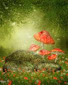 houby a skály