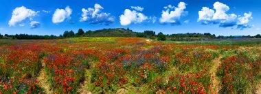 Summer flower field in France