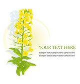 Fotografie Yellow blooming rapeseed