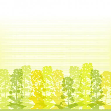 Rape blossom silhouettes on lined background