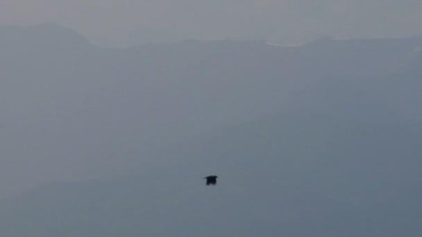 Wildlife fliegenden Vogel Silhouetten
