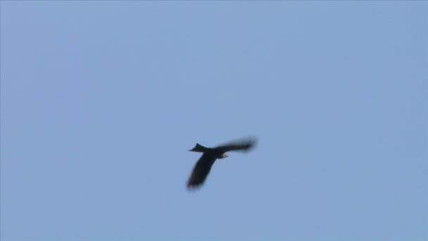 Wildlife flying bird silhouettes