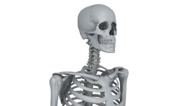 model kostry