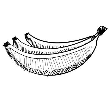 vector illustration of a bunch of bananas