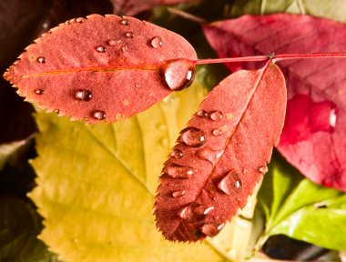 Leafs and drops