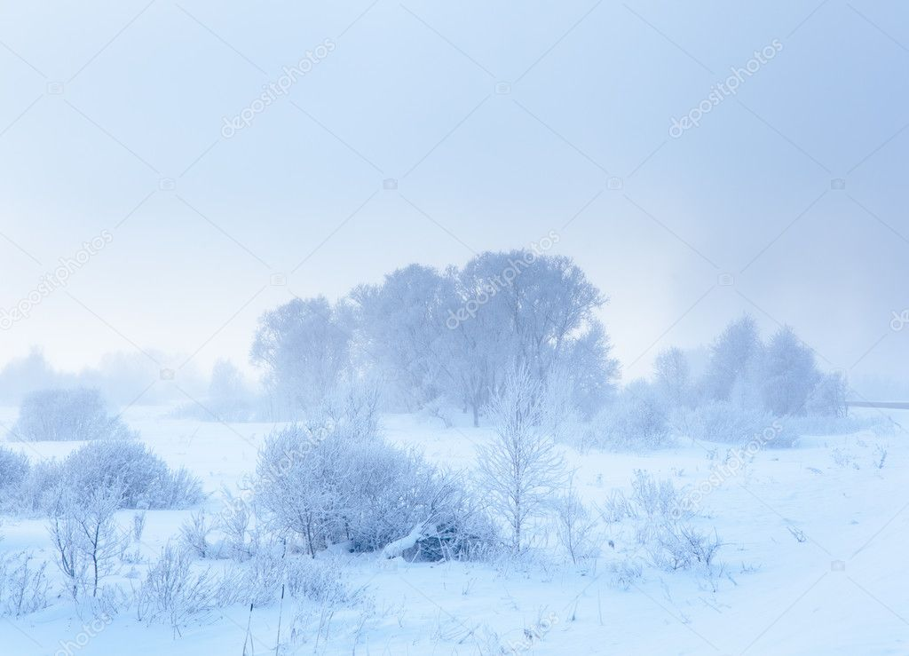 Winter landscape. Cold winter morning