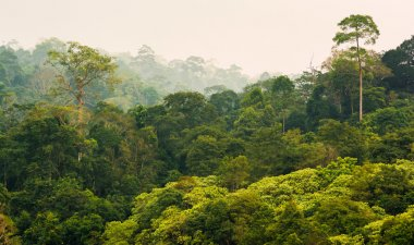 Tropical rainforest,Khao Yai National Park Thailand stock vector