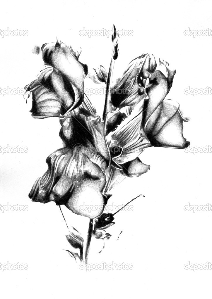 Blume Natur Pflanze-Kunst-design — Stockfoto © maxtor7777 #28260847