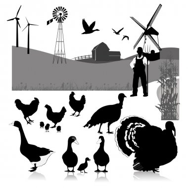 Vector illustration:farm birds