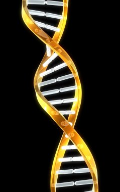 A double helix strand of dna with black background for copyspace.