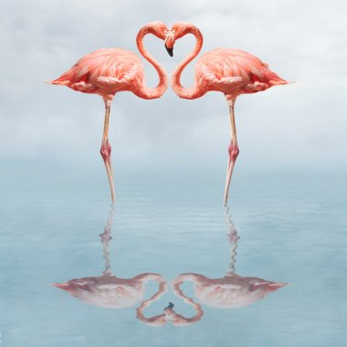 Flamingos in water making a heart shape