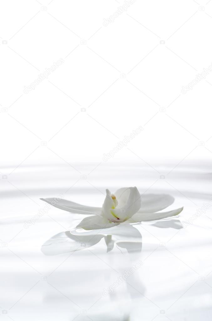 Цветок орхидеи в воде