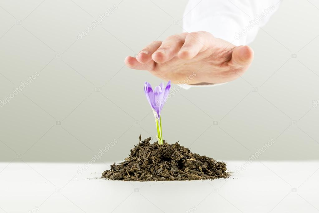 Man nurturing a freesia flower growing in earth