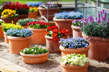 Beautiful different flowers in ceramic flowerpots in spring park