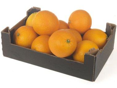 Box of Oranges isolated white background