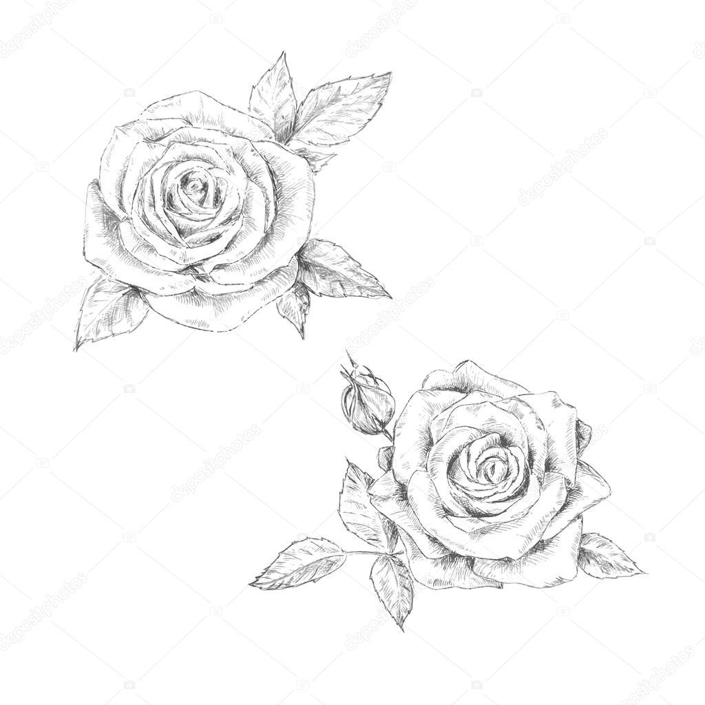 Dibujos A Lapiz De Rosas Y Mariposas Dibujo A Lápiz De La Rosa