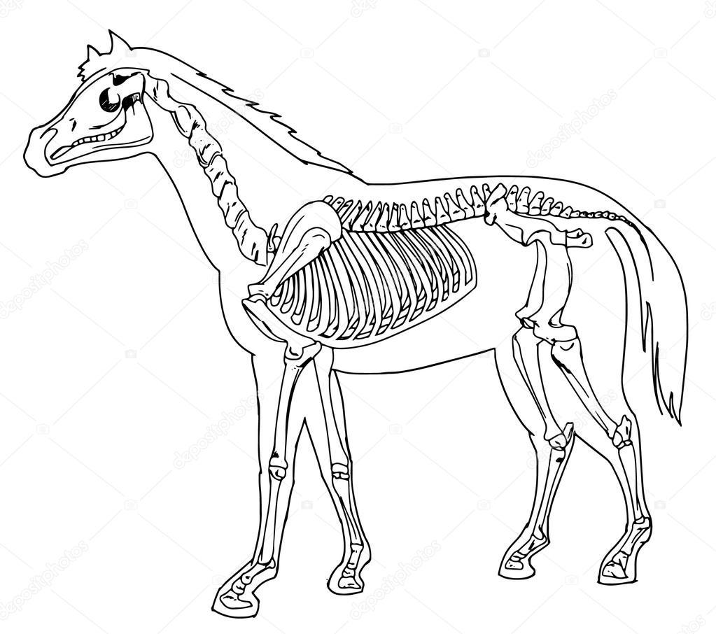 esqueleto de caballo — Archivo Imágenes Vectoriales © blueringmedia ...
