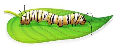 Monarch butterfly - Danaus plexippus - larva stage