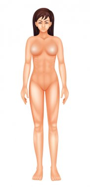 Female Body
