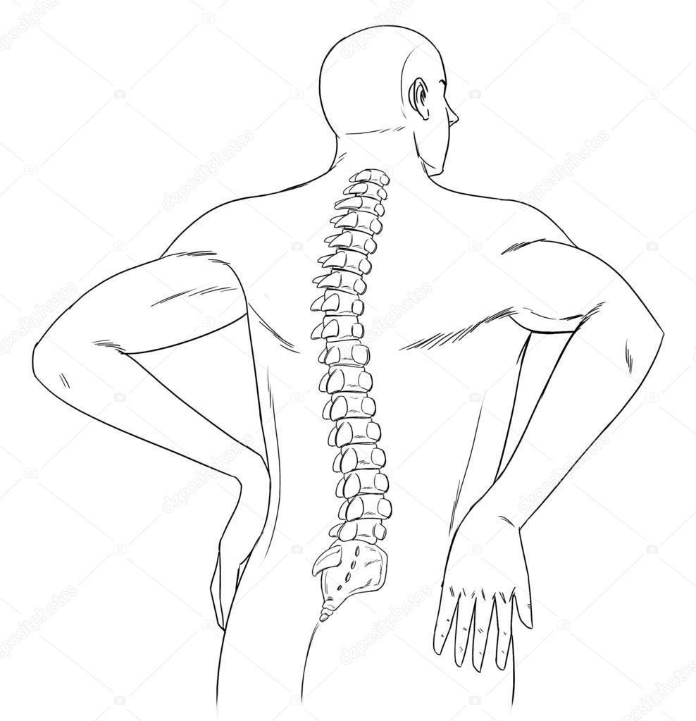 columna vertebral humana — Archivo Imágenes Vectoriales ...
