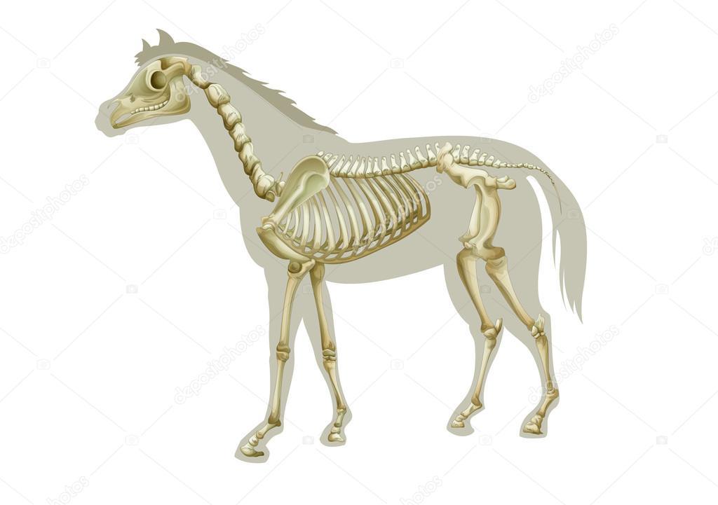 Pferd Skelett — Stockvektor © blueringmedia #16815579