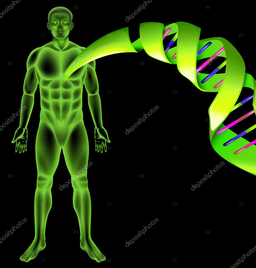 Male Human DNA