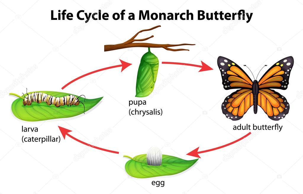 mariposa monarca — Archivo Imágenes Vectoriales © blueringmedia ...
