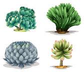 különböző kaktuszok