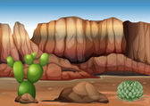 kaktusz a sivatagban