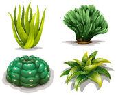 Aloe vera növények és kaktuszok