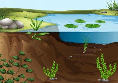 A pond ecosystem