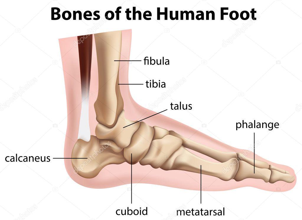 kraakbeen voet