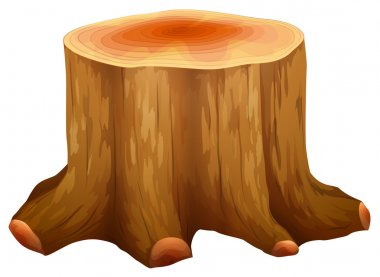 A stump of a big tree