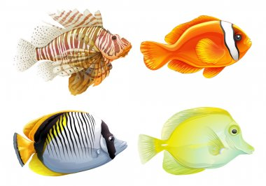 Four fishes