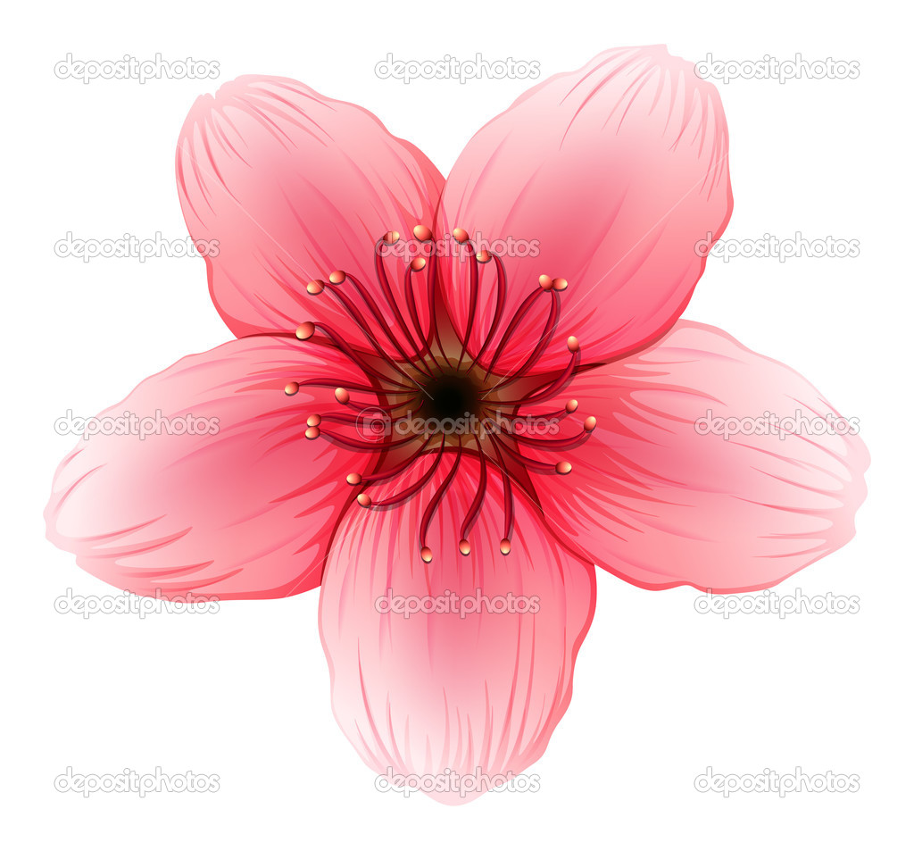 A Pink Five Petal Flower Stock Vector Blueringmedia 43023827