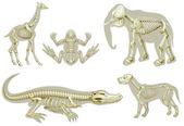 csontvázak állatok