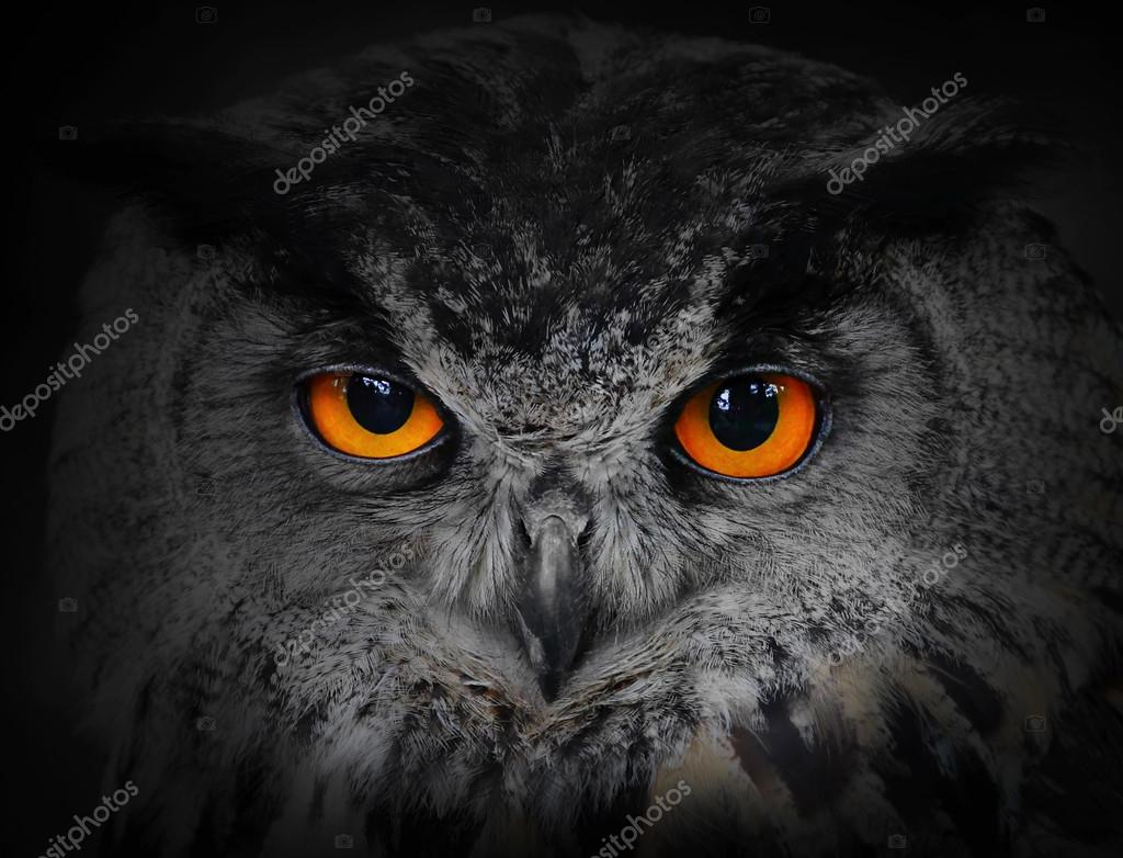 Eagle Owl, Bubo bubo stock vector