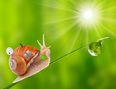 Funny picture of the snail going on vacation with his mobile home. Happy holidays concept.