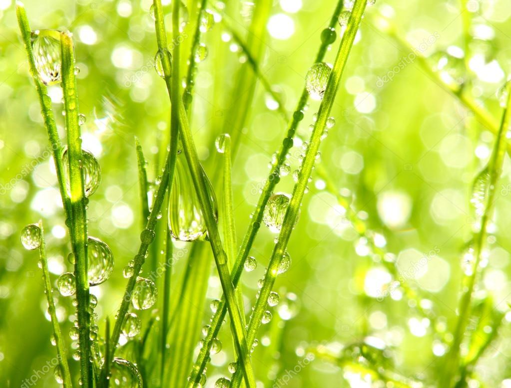 Fresh morning dew.