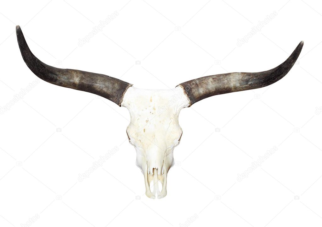 Изображение коровы