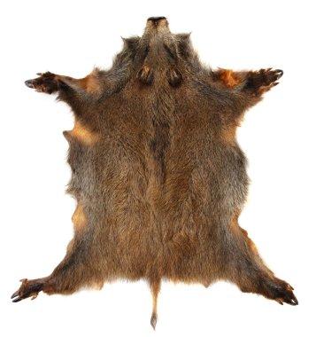 Wild boar skin