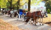 Fotografie tažní koně v parku