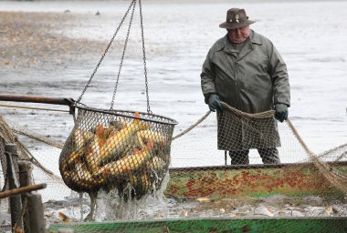 Unidentified fisherman enjoy harvest of pond Blatna