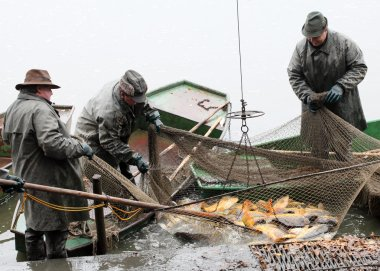 Unidentified fishermen enjoy harvest of pond Blatna